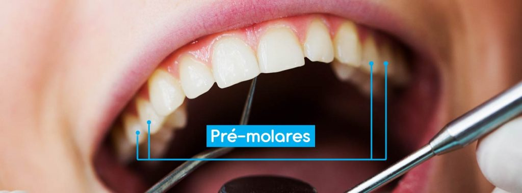 Saúde bucal: Quais os 4 principais tipos de dentes e suas funções